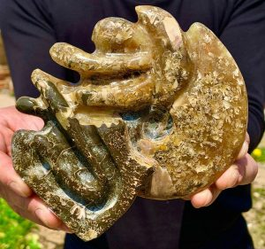 1.38 LB (0.631 Kg) Tentacle Ammonite Fossil Conch
